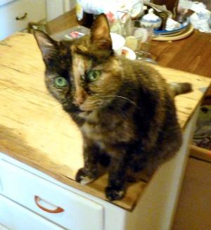 tortie cat looking up