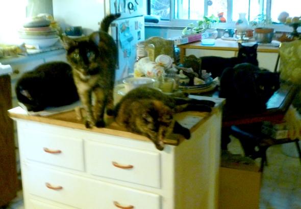 five cats watching