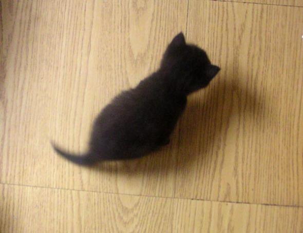 black kitten on floor