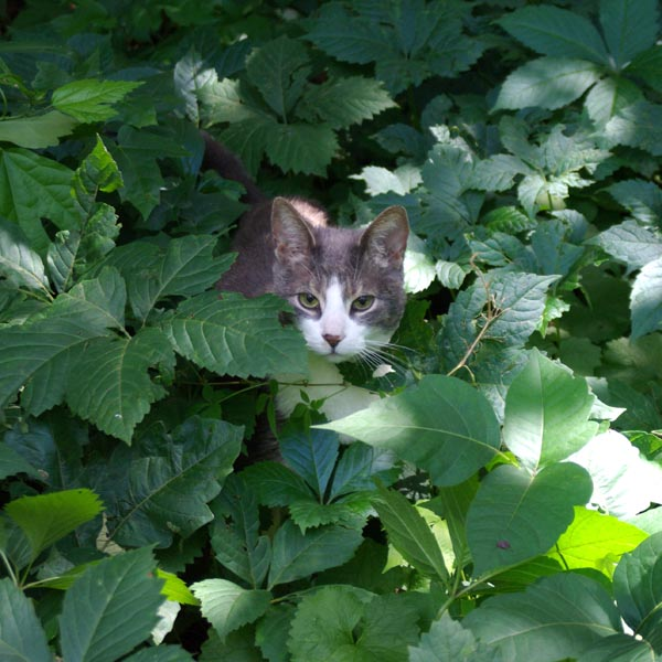 gray and white cat in weeds