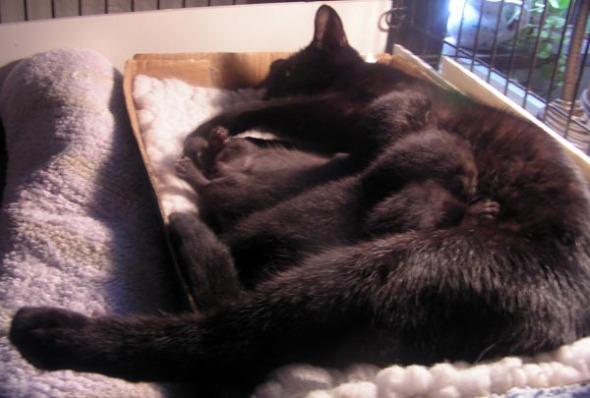 cat nursing kittens