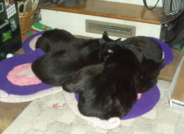 five cats on rug
