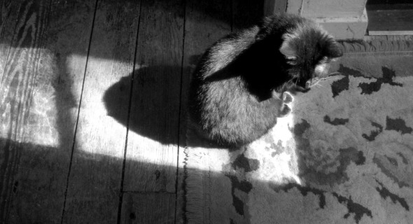 black cat on rug and floor black and white