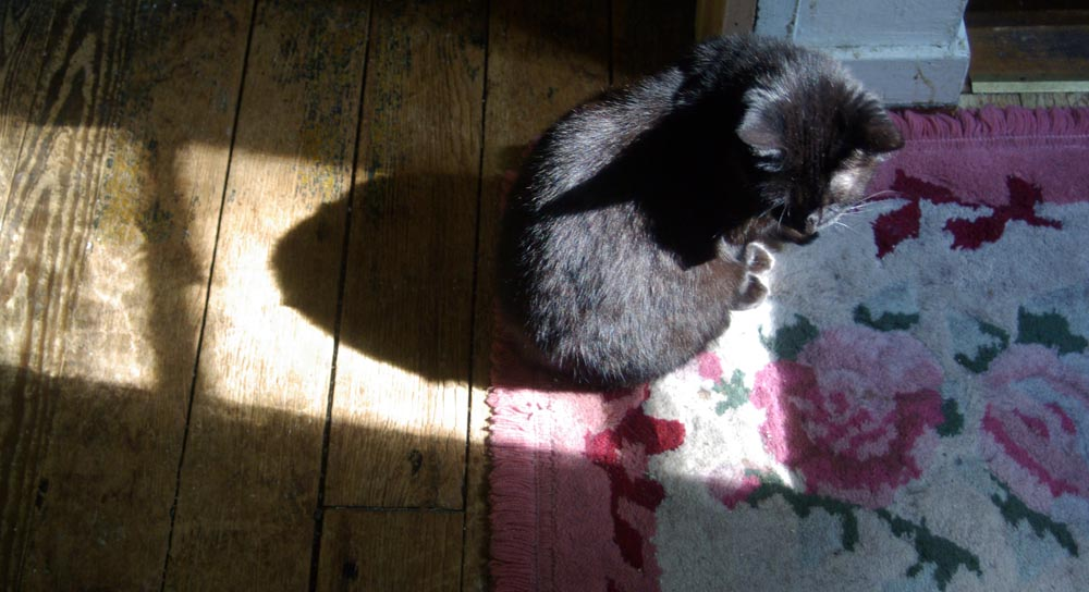 black cat in sun on flowered rug and floor
