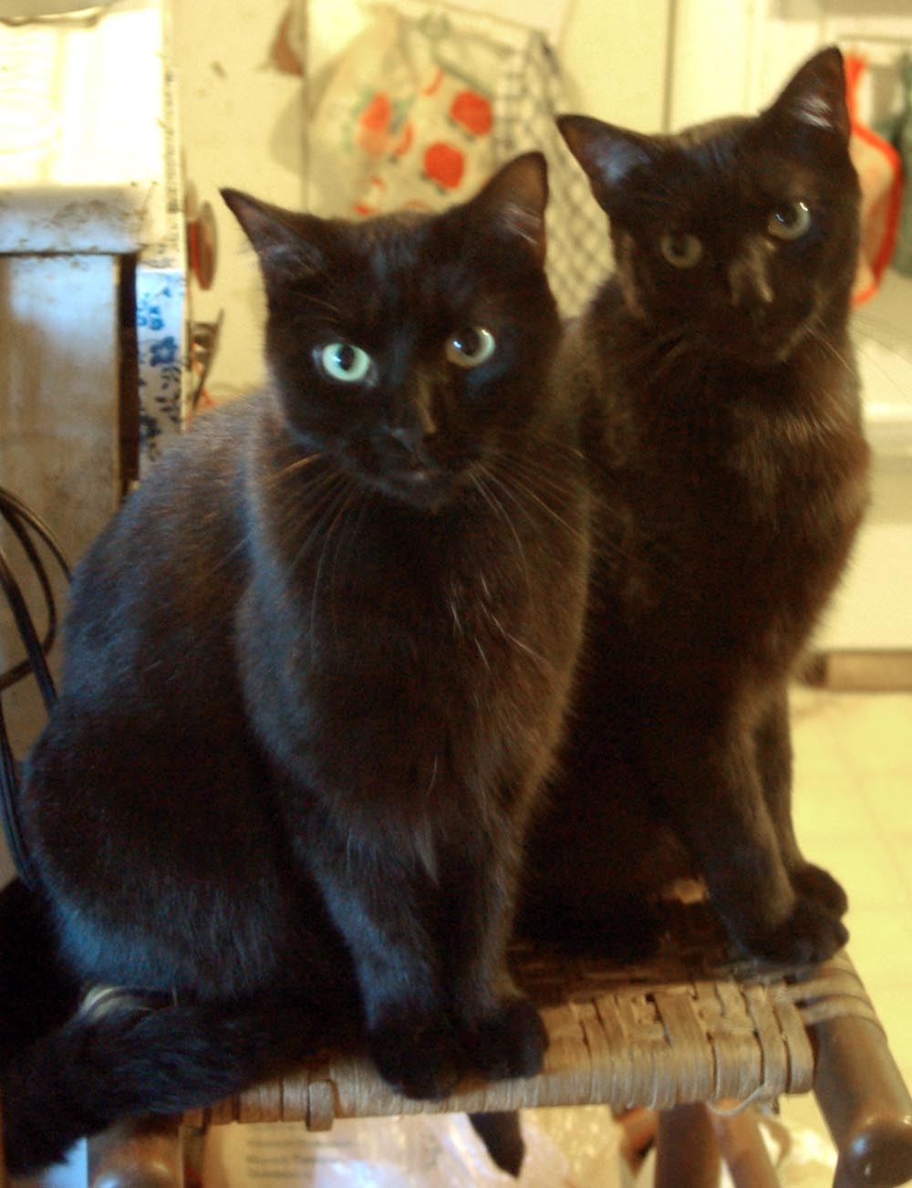 two black cats on kitchen stool