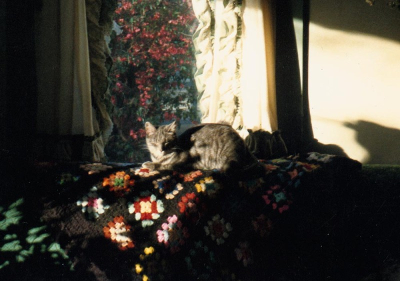 cat on afghan