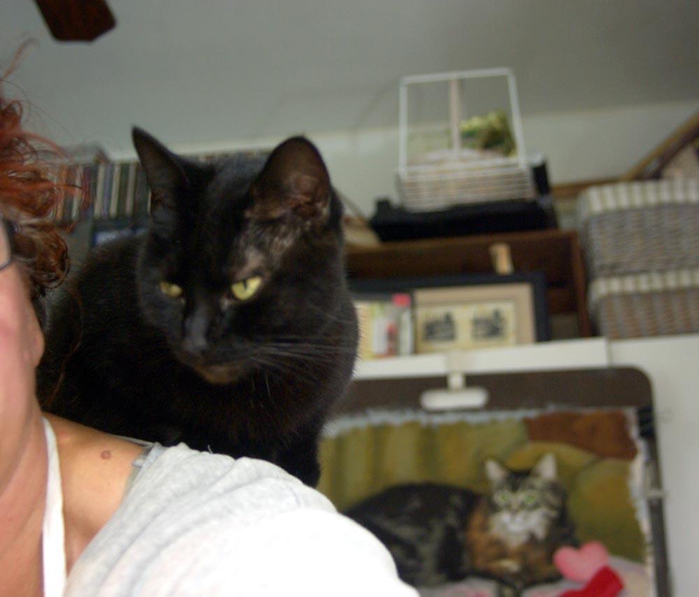 black cat on shoulder
