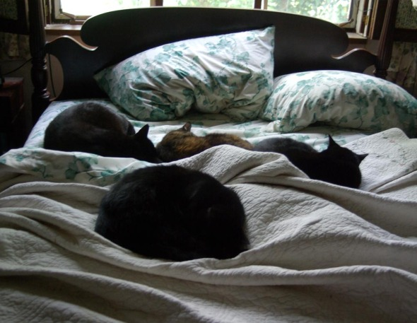 cats on an unmade bed
