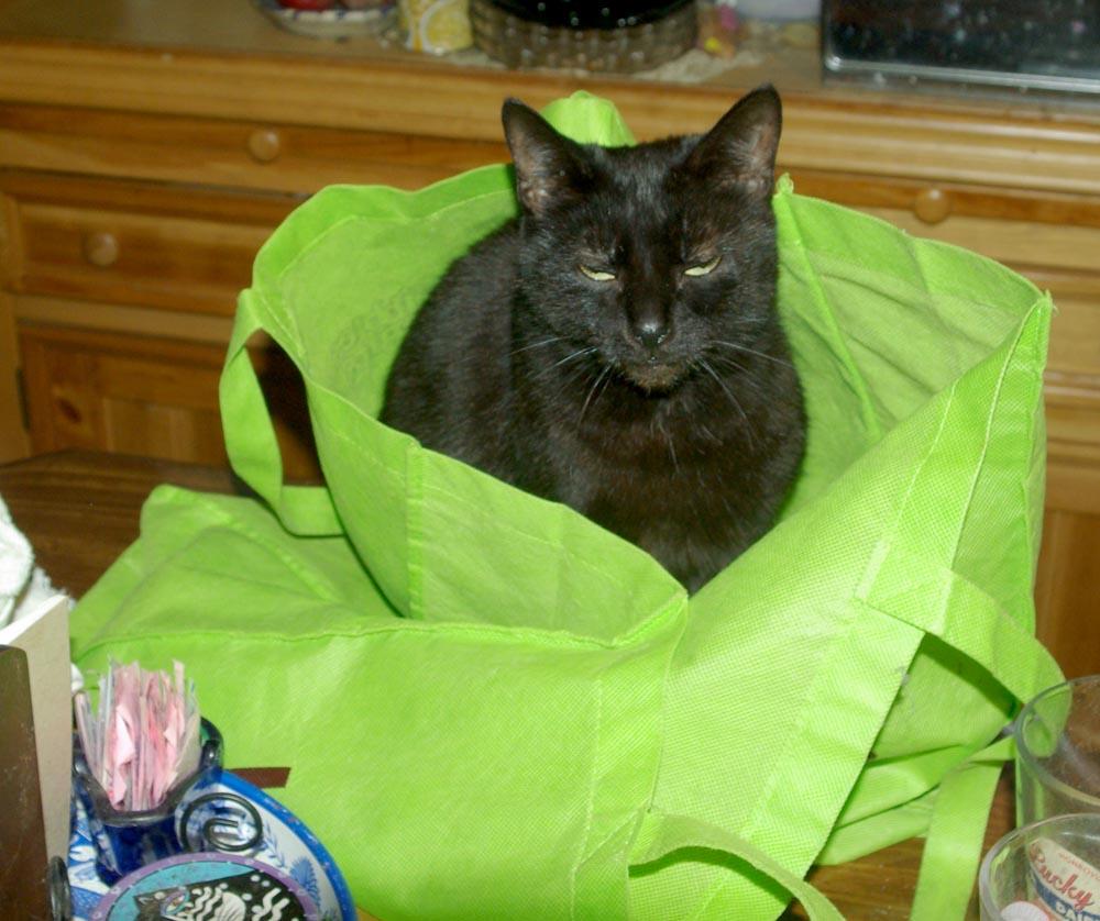 black cat in green bag