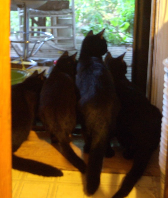 four black cats looking out door