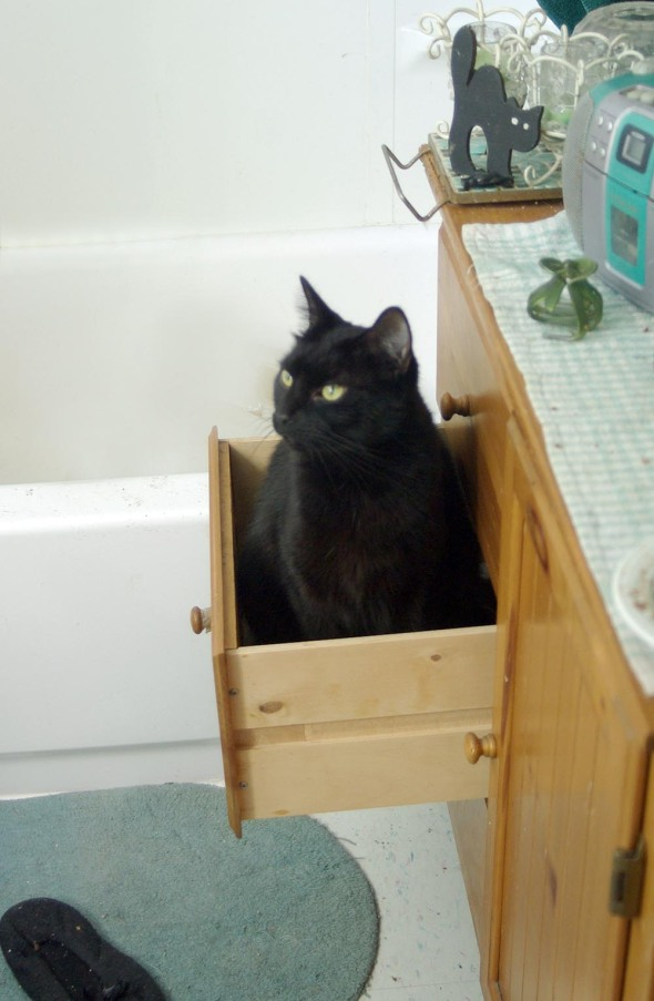 black cat sitting in drawer