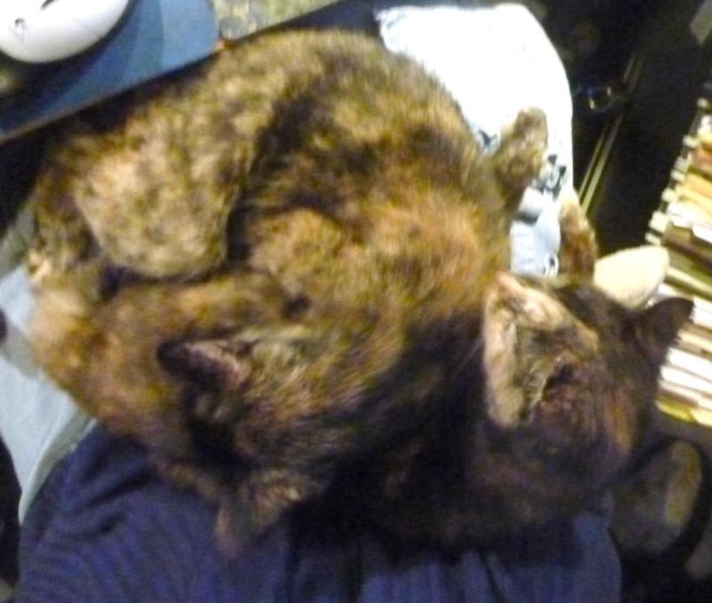 two tortoiseshell cats bathing