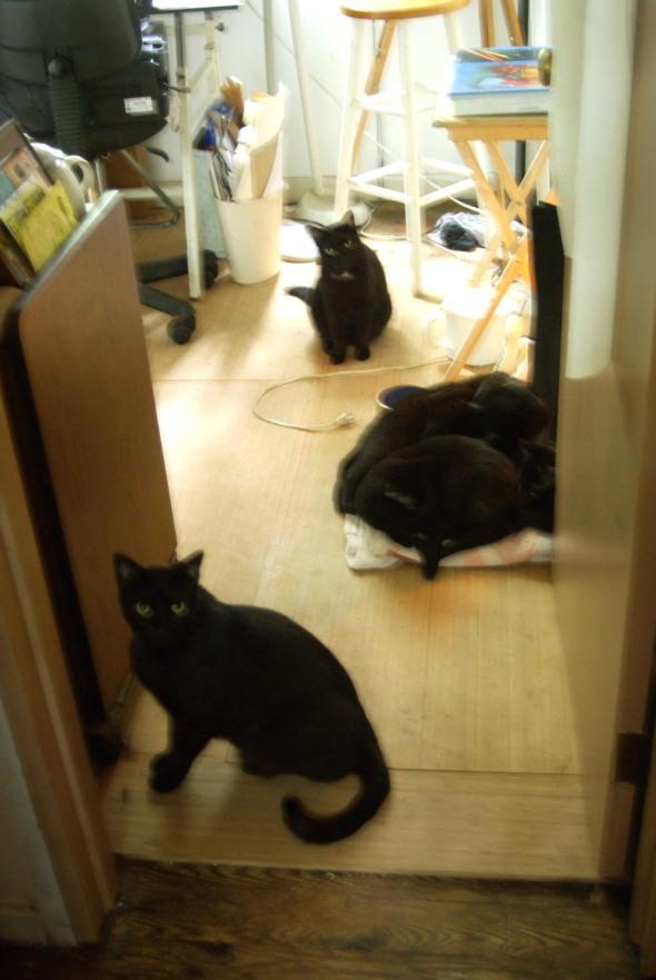 five black cats in room
