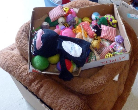 cat toys and beds