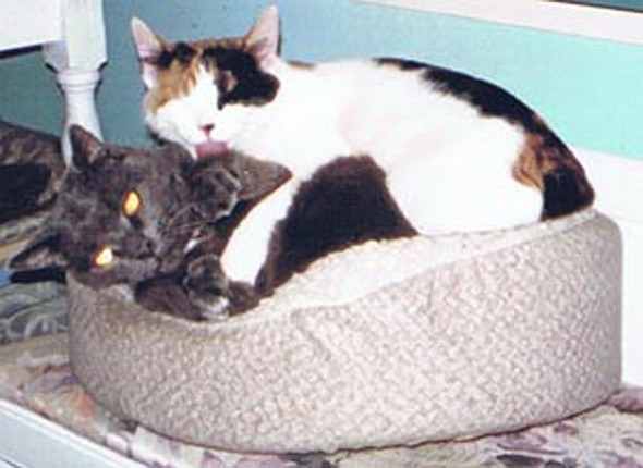 two cats in cat bed