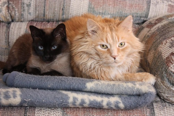 two cats on couch