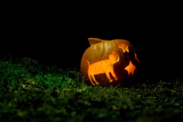 kitty jack o lantern