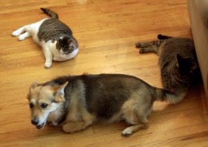 three animals on floor