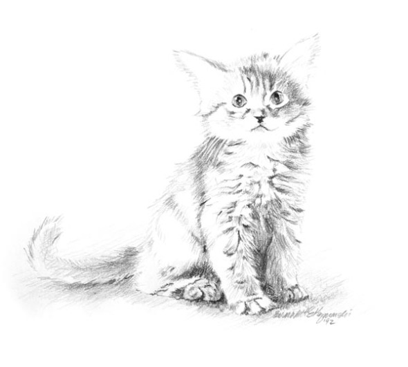 pencil sketch of kitten