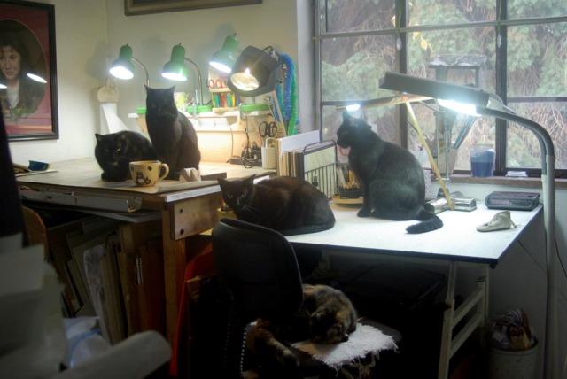 five cats in studio