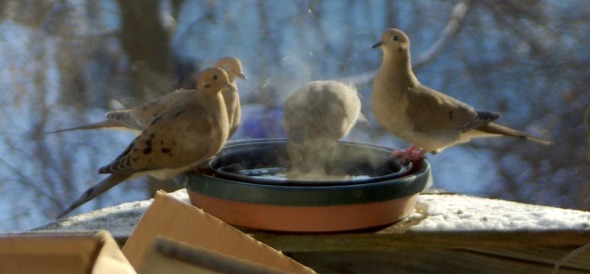 doves at birdbath