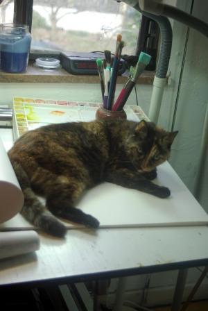 tortie cat on table