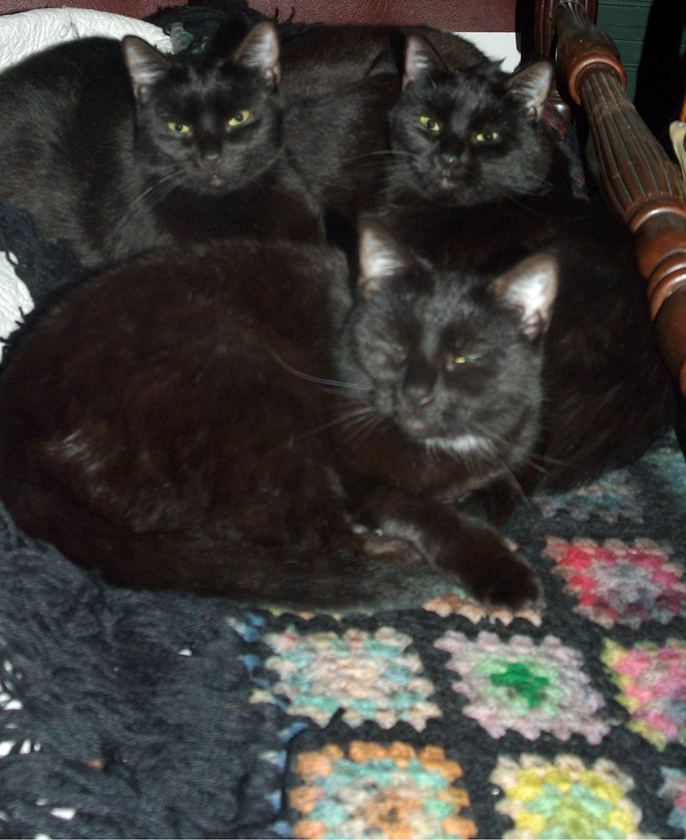 three cats on afghan