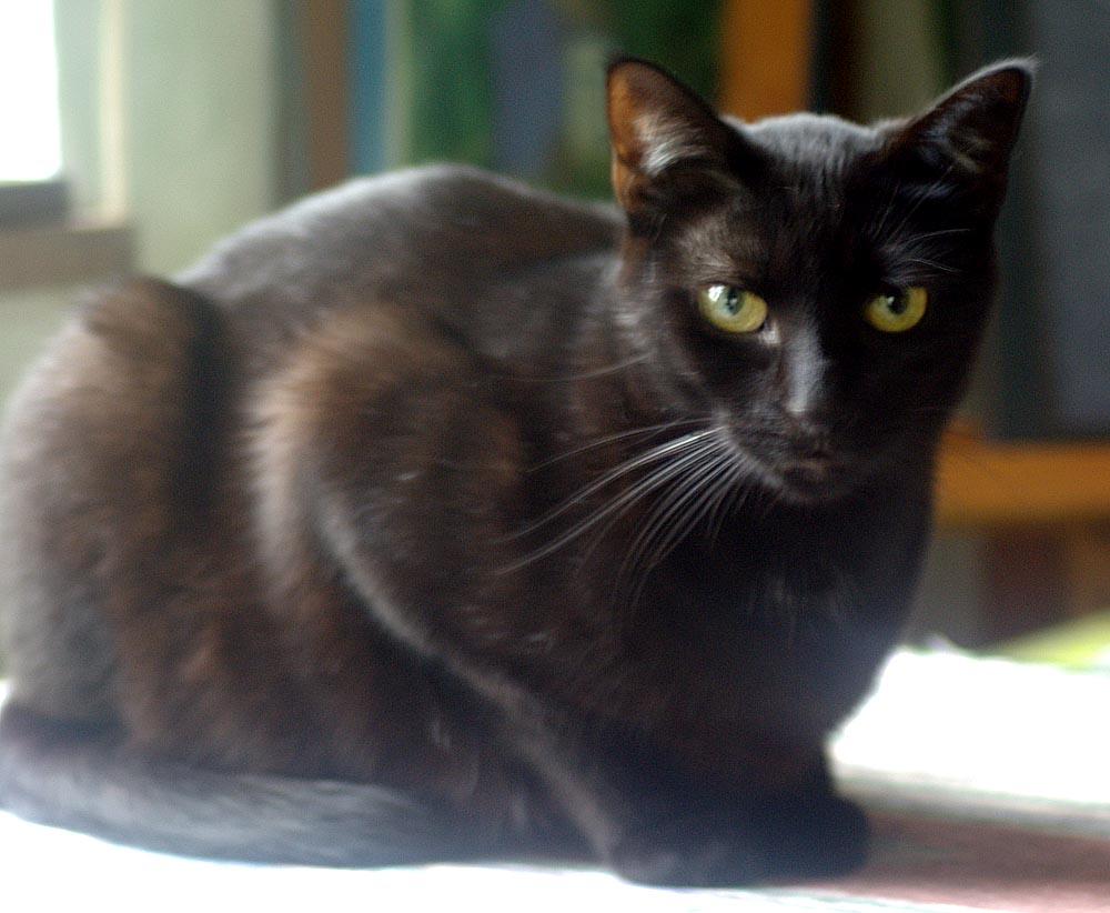 black cat with white whisker