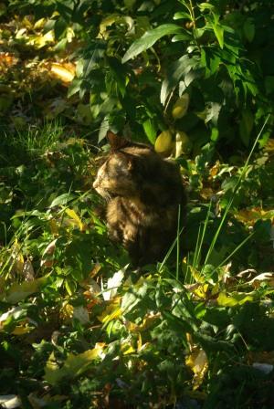 tortie cat in leaves