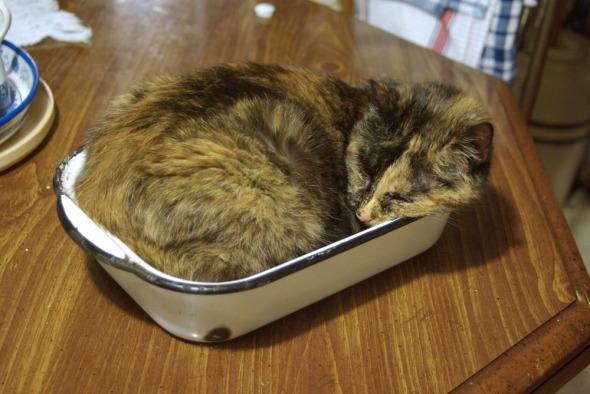 tortoiseshell cat in enamel pan