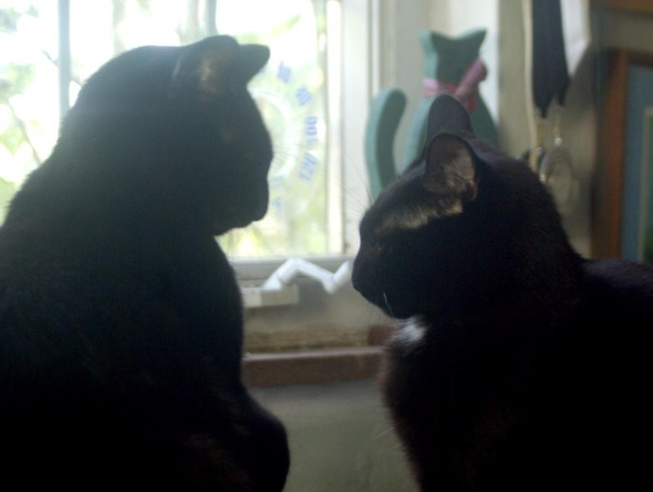 two black cats looking at each other