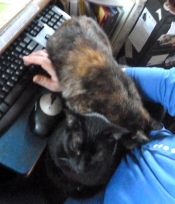 tortie cat draped over arm and black cat