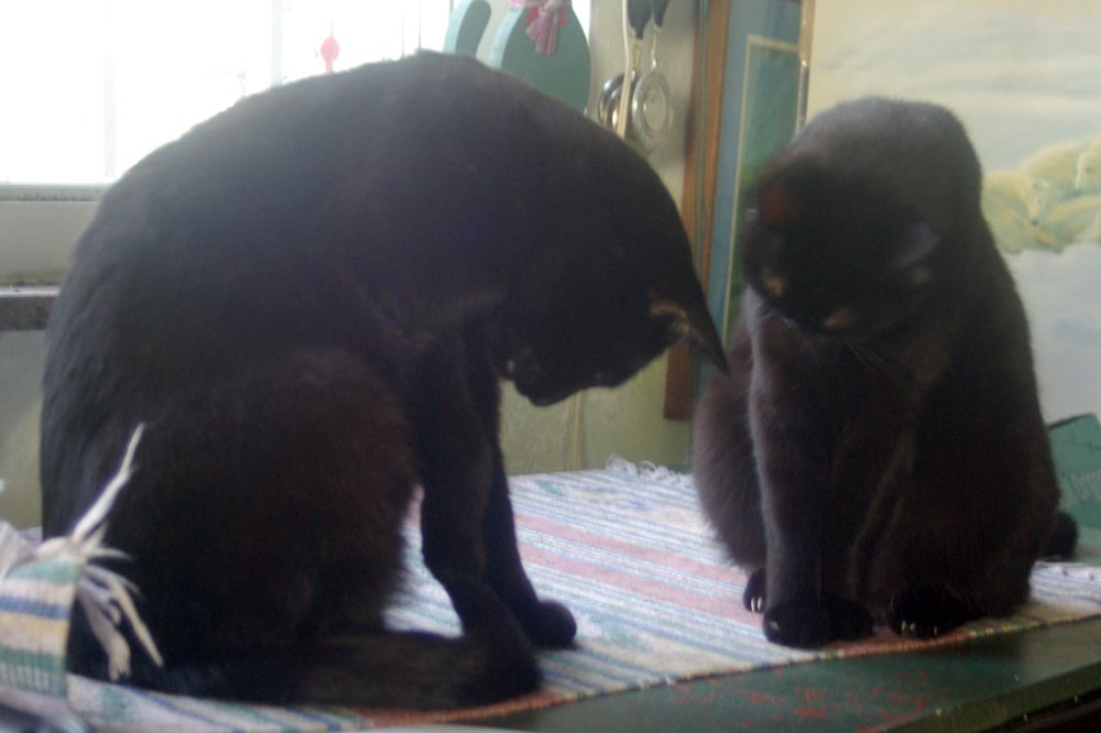 two black cats staring at something