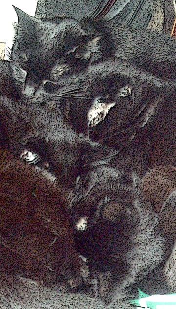 four black cat faces