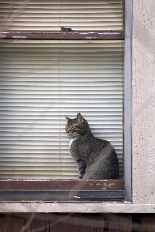 tabby cat sleeping on windowsill