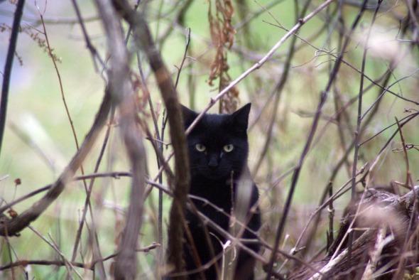 black cat in weeds