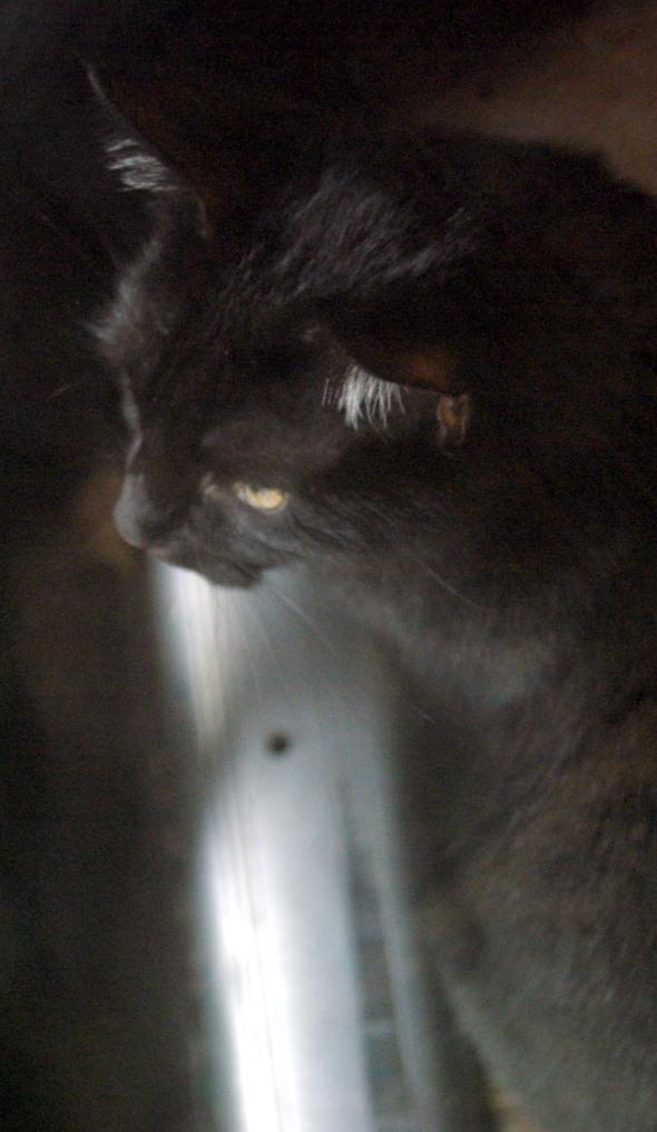 black cat at door Daily Cat Photo