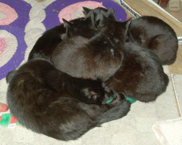 five cats piled up