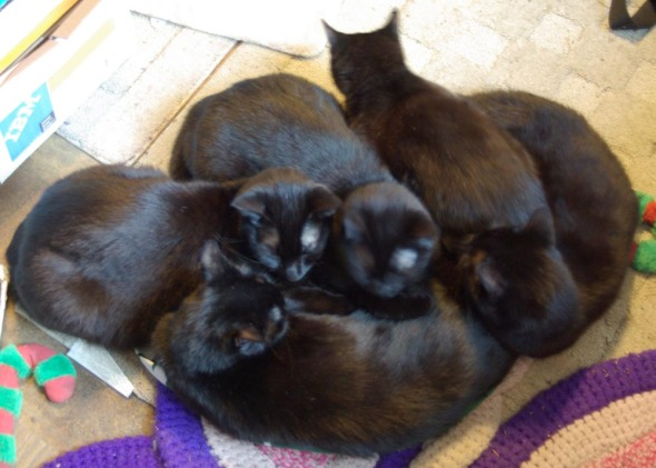 a pile of five black cats