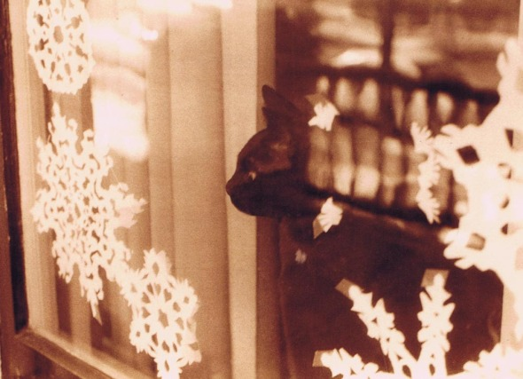 photo of cat with cut paper snowflakes on window