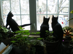 kittens at window