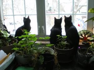 kittens at window