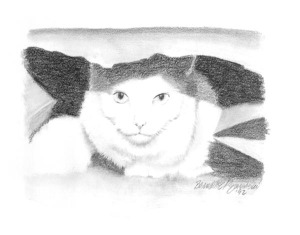 pencil sketch of cat in bag