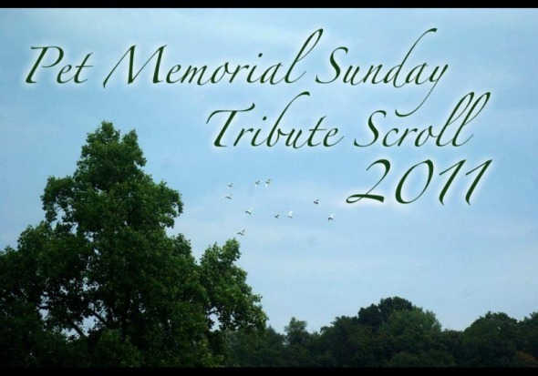 opening slide to tribute scroll
