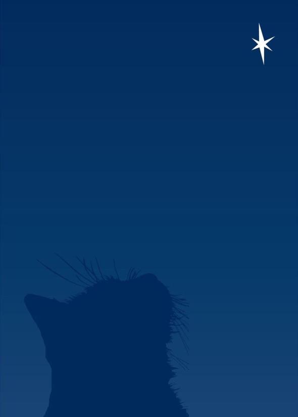 cat looking at star