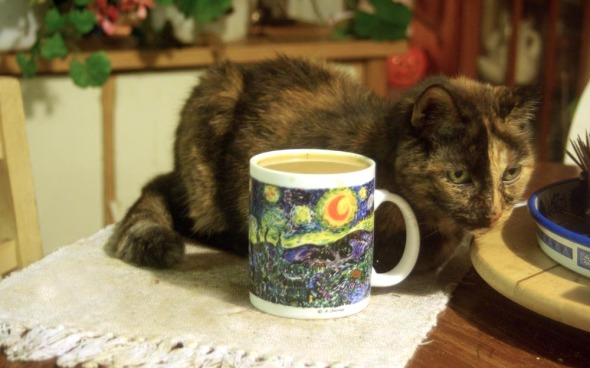 tortoiseshell cat with cup of coffee with starry night printed