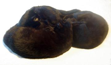 three black cats sleeping in a circle