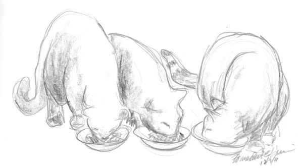 pencil sketch of three cats eating