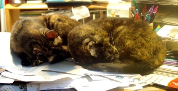 two tortoiseshell cats on the desk