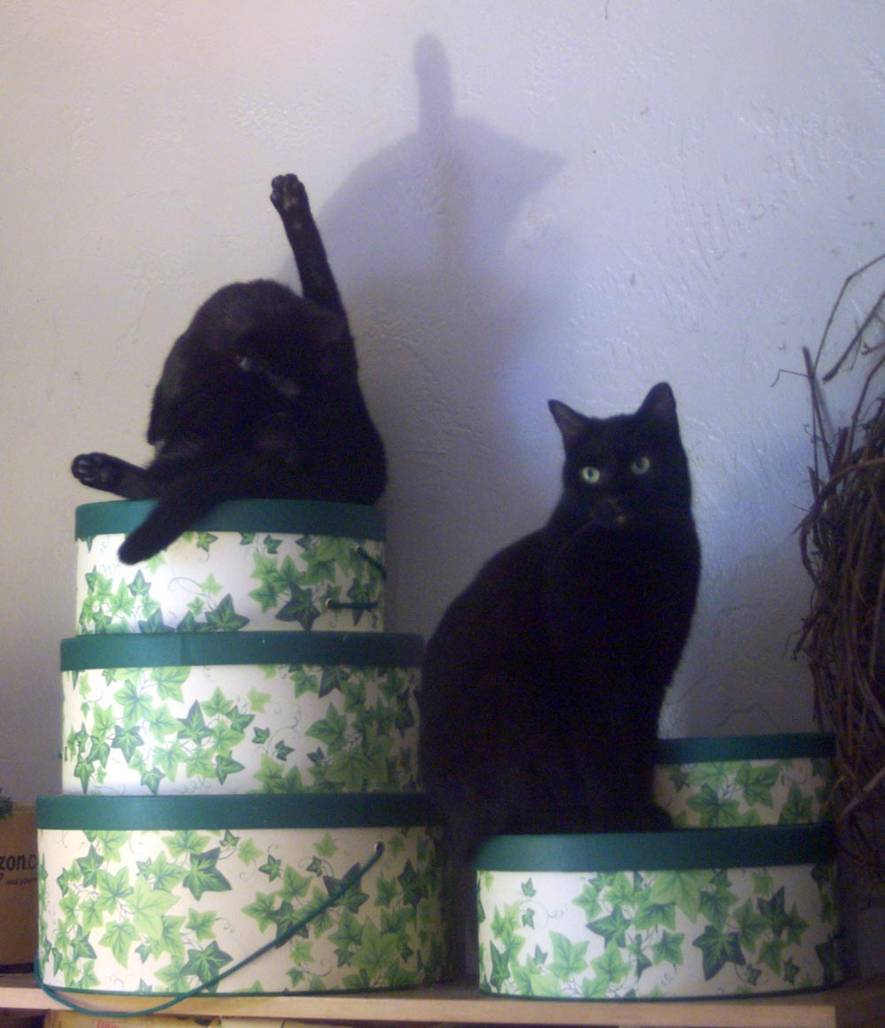 photo of two black cats